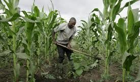 Agriculture, Agrilet, Technology, Nigeria